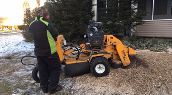 Robblee tree service work Stump Grinding