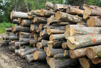 nh forest products firewood nh wide pine boards
